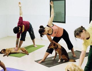 dog_yoga.jpg